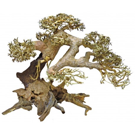 Cận cảnh cây bonsai driftwood
